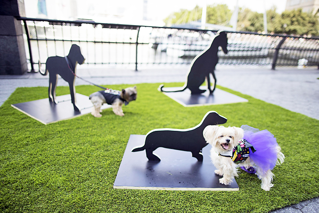 Dogs interact with Merav Ezer's 'The Barking Project'