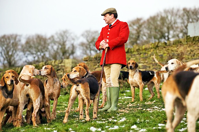 a discussion on the fox hunting issues in the great britain The sport of fox hunting with hounds in britain, from its beginnings in the 16th century to the hunting act 2004 the great horse manure crisis of 1894.