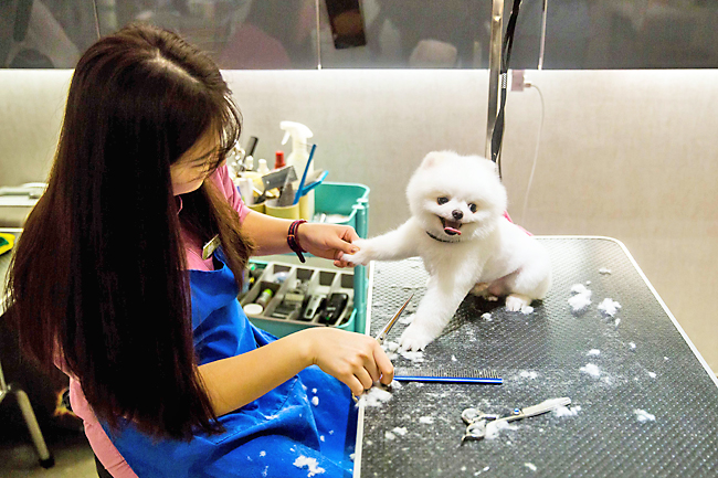 Milk Spas And Manicures A Hong Kong Dog S Life Borneo Bulletin Online