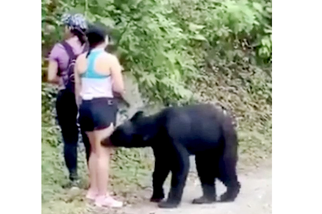 Black bear seen sniffing hikers in Mexico seen playing AGAIN